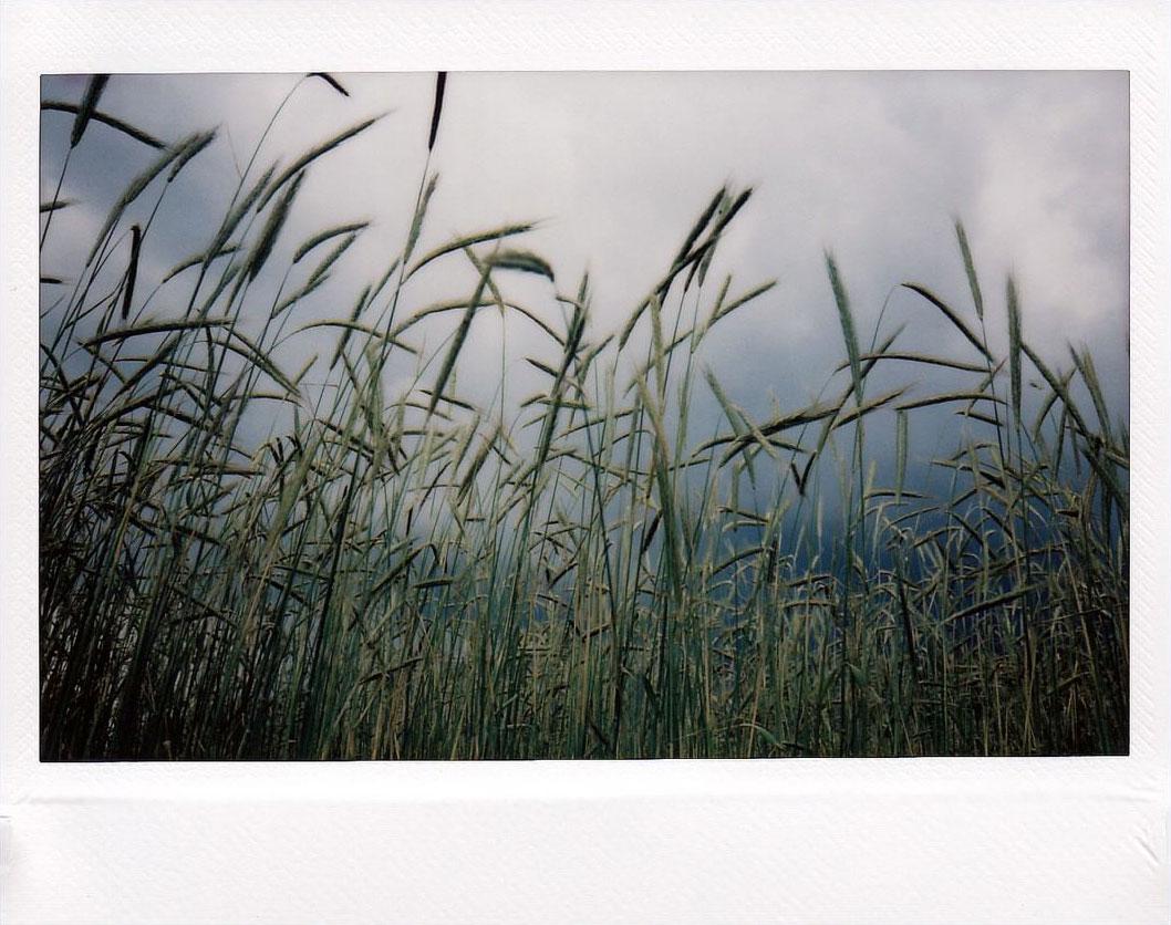 Photo Olivier Gimeno